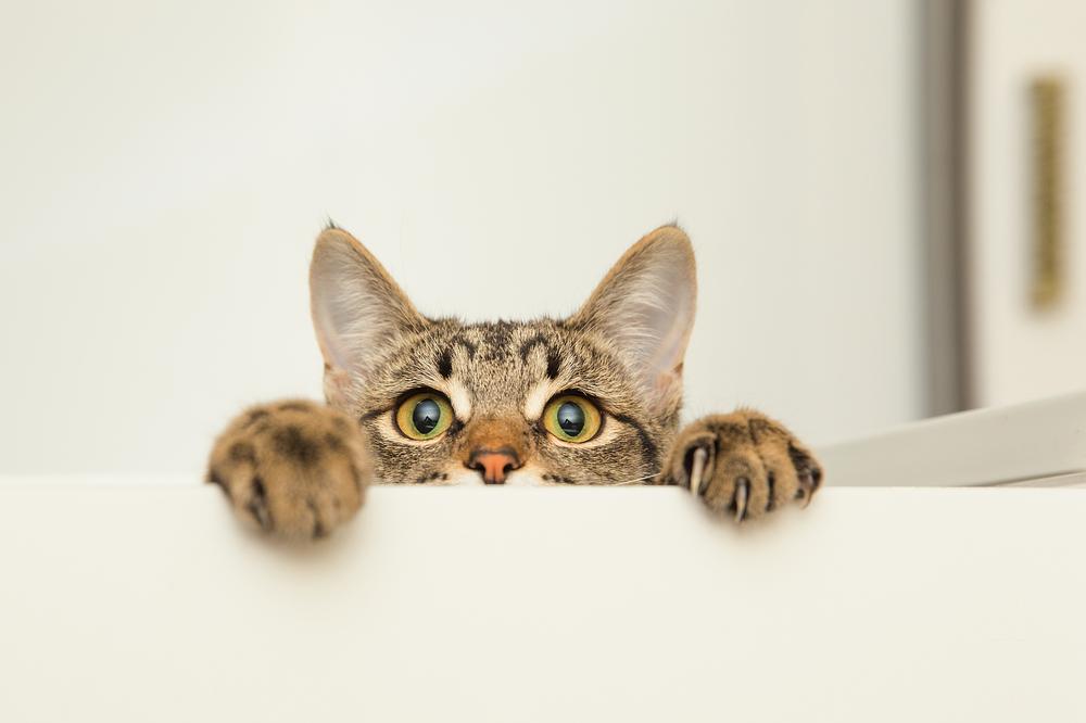 猫カフェの「ねこかつ」は保護猫カフェとして訪ねてみたい場所