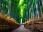 京都・嵐山~保津峡の紅葉は保津川下りとトロッコ列車がおすすめ