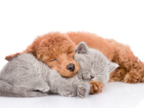 「犬と猫どっちも飼ってると毎日たのしい」のアニメに癒されてみよう!